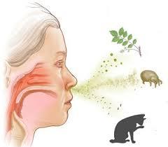 kak-lechit-allergicheskij-nasmork