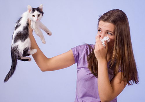 Какие есть эфирные масла от аллергии?